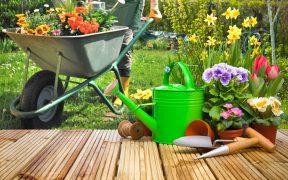 Jak dbać o ogród przez cały rok?