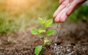 Jak stworzyć idealne warunki roślinom do rozwoju